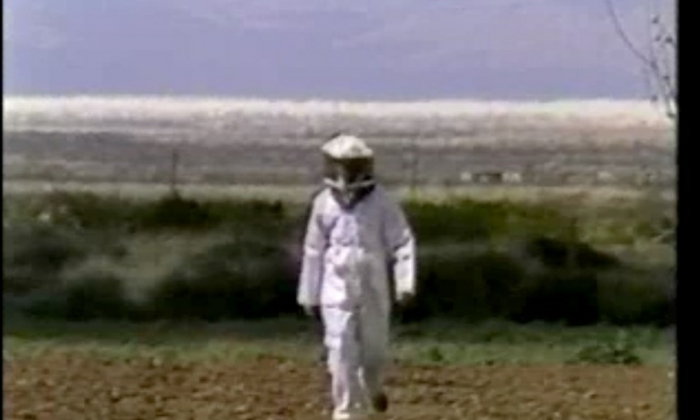 Wax, or the Discovery of Television among the Bees, video still.